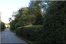 TL4425 : Albury Road, Clapgate by David Howard