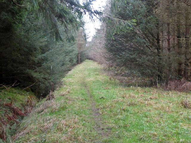 Path in Bowmont Forest