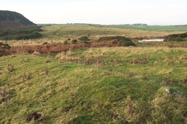 Heathland near Dunstanburgh Castle
