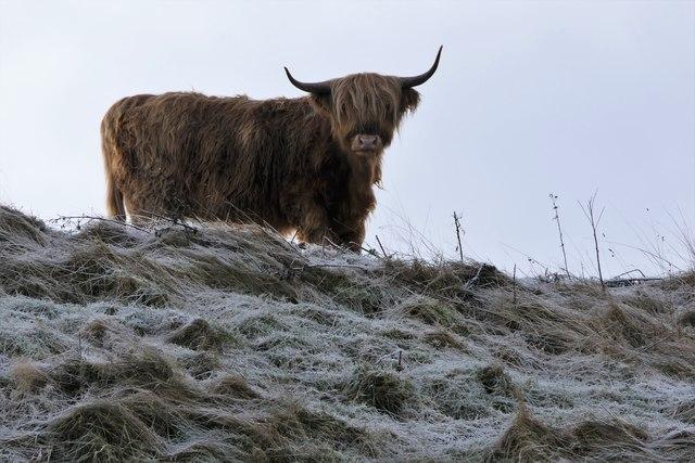 Standing on Hill Above Balgavies Loch