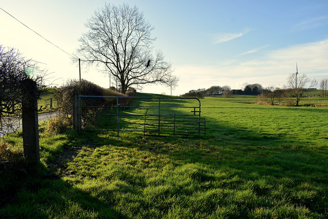 Open gate to field, Donaghanie