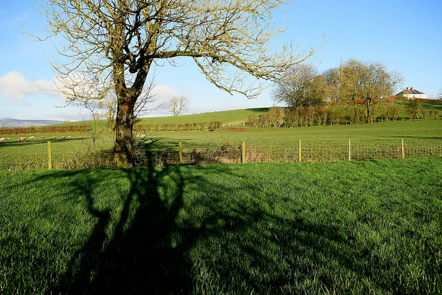 Tree shadows, Donaghanie