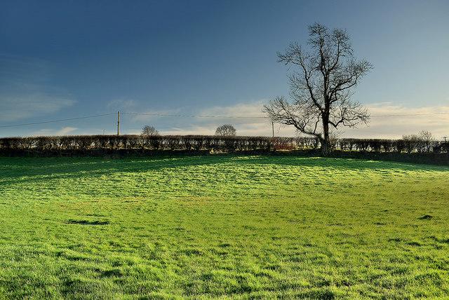 Grass field, Donaghanie