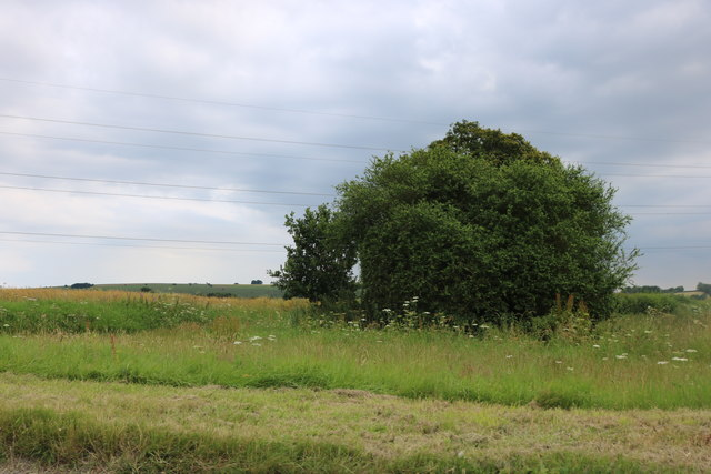 Field by the A338 near Marten