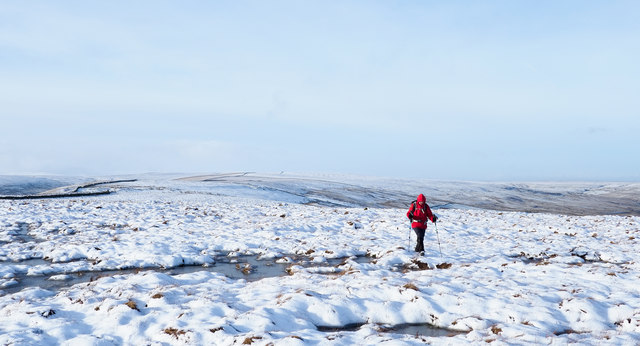 Summit area of Windy Hill