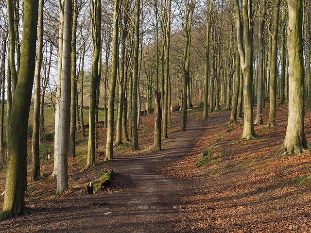 Woodland path at Linacre Reservoirs