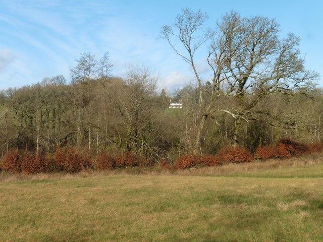 View towards Bradford Tracy House