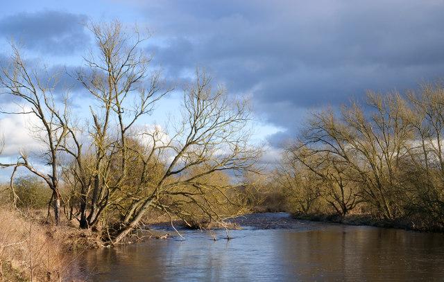 Overhanging trees alongside River Wear