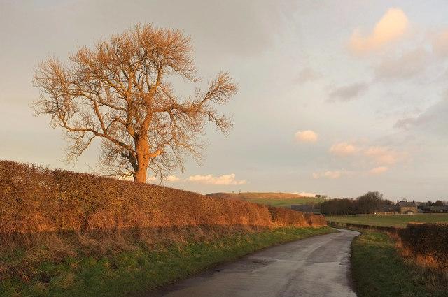 Tree near Branton