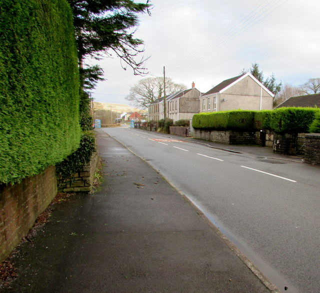 Evergreen hedges alongside the A4109 Dulais Road, Seven Sisters