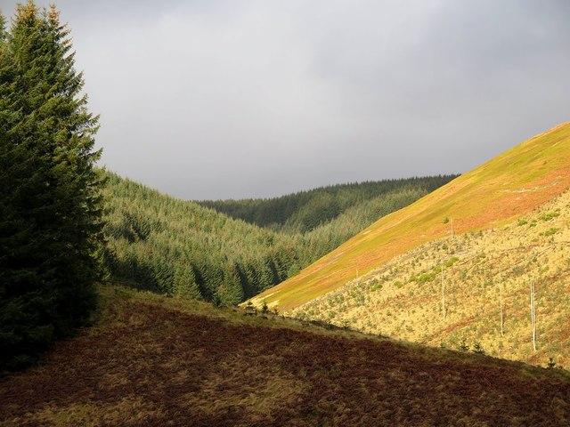 Valley of East Burn, Kidland Forest
