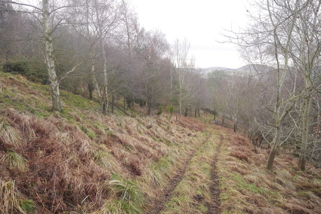 Woodland on Pawston Hill
