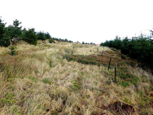 Boundary fence on Wether Hill