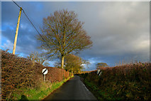 ST2112 : Churchinford : Royston Road by Lewis Clarke