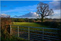 ST2212 : Churchstanton : Grassy Field by Lewis Clarke