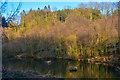 ST2213 : Churchstanton : Royston Lake by Lewis Clarke
