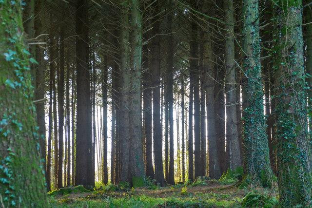Churchstanton : Woodland