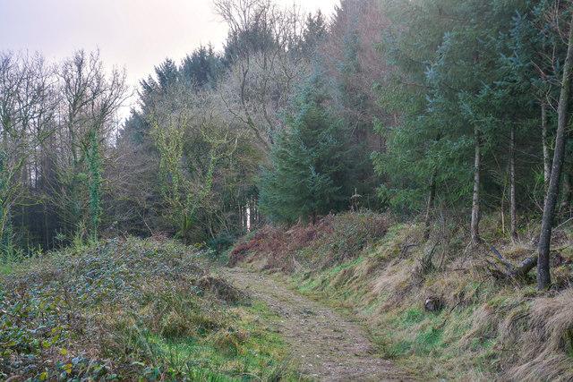 Churchstanton : Footpath
