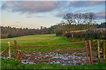 ST2113 : Churchstanton : Grassy Field by Lewis Clarke