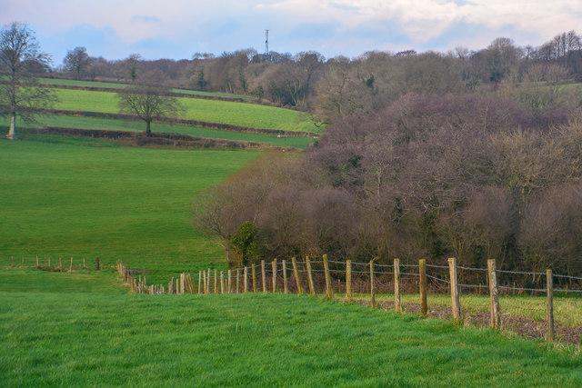 Churchstanton : Grassy Field