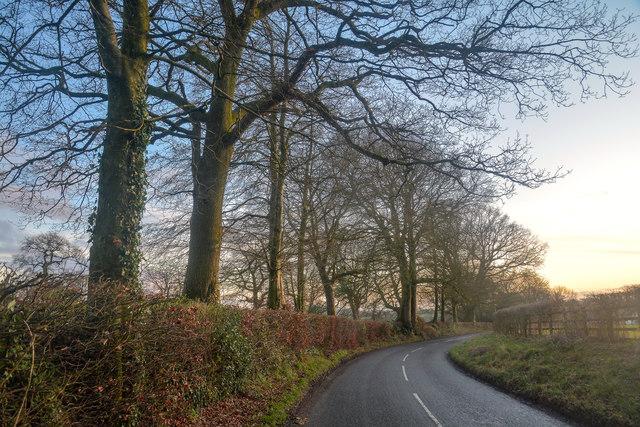 Churchstanton : Country Road