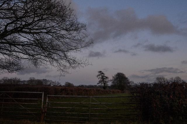 Churchstanton : Grassy Field & Gate