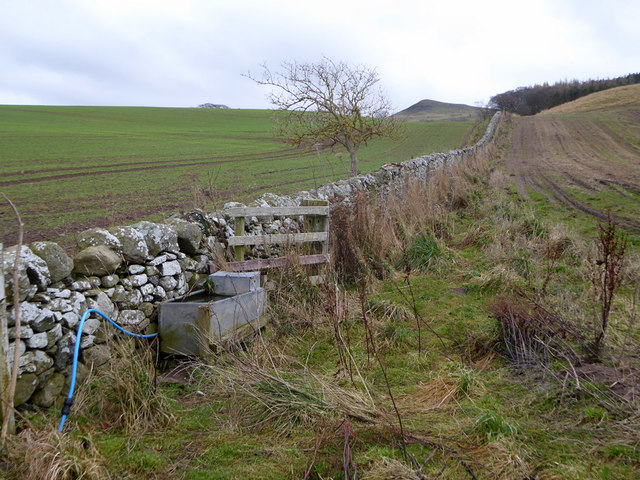 Cattle trough and stone wall