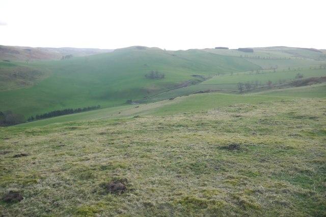 Summit pasture, Morebattle Hill