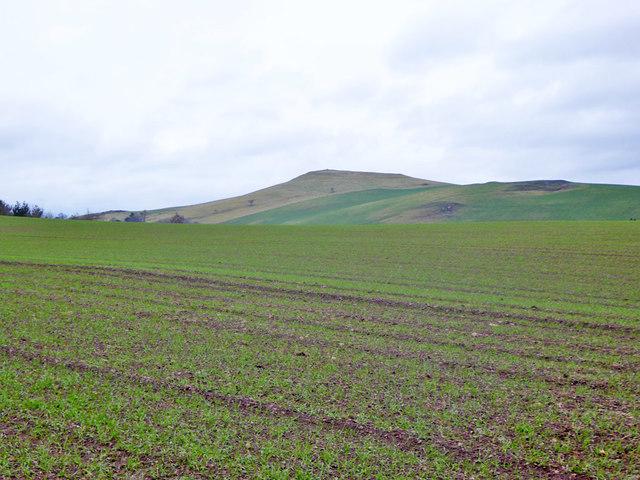 Arable field near Grubbit Plantation