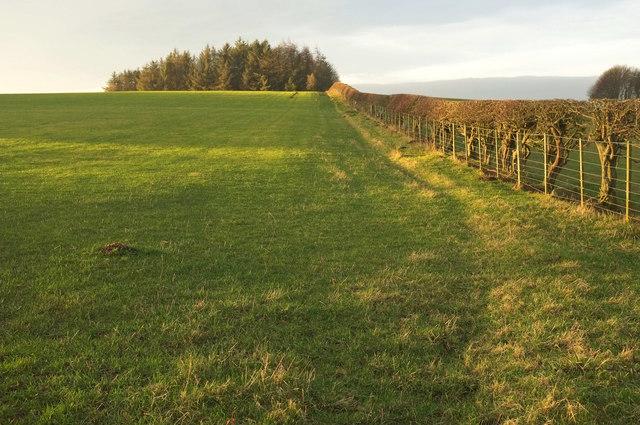 Grass field near Mile End Farm