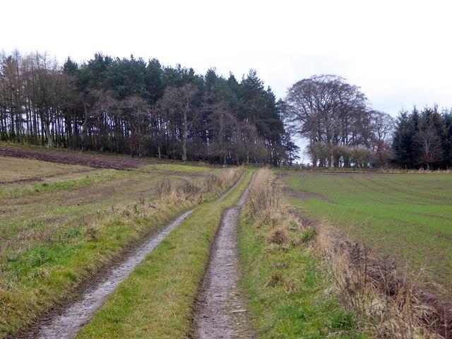 Track towards Grubbit Plantation