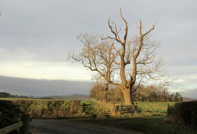 Trees near Mile End Farm