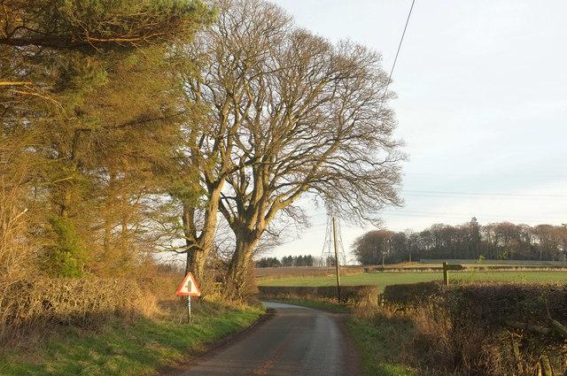 Road near Mile End Farm