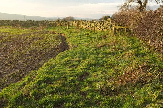 Field edge near Mile End Farm