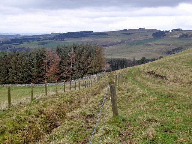 Drainage ditch above Grubbit Plantation