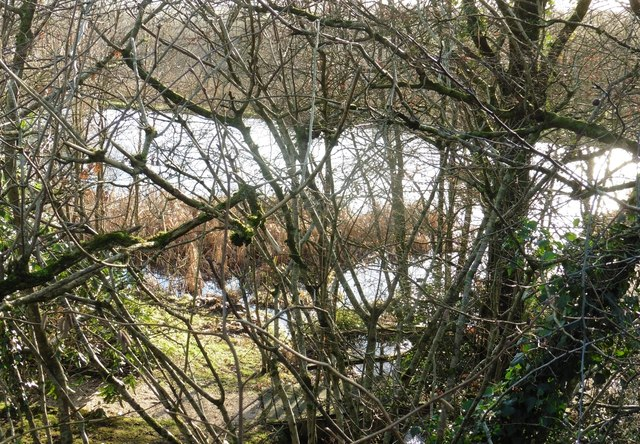 A glimpse of the pond at Higher Blagrove
