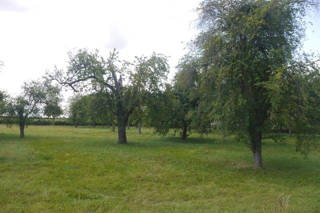 Orchard, Wyatt