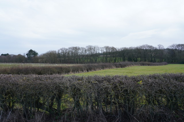 Fields next to Far Lane