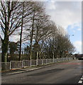 SN8108 : Tree-lined side of Commercial Street, Seven Sisters by Jaggery