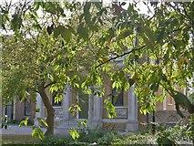 TQ1780 : Ealing buildings [30] by Michael Dibb