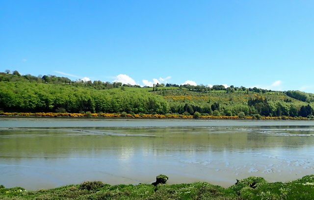 Whin bushes along the eastern bank of the Newry River