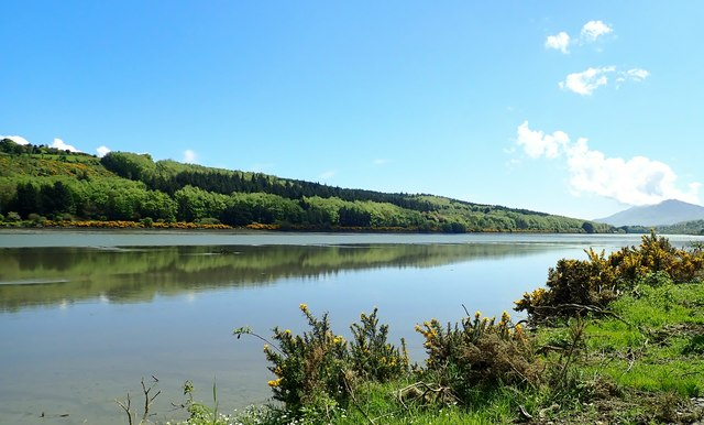 The Narrow Waer Forest reflected in the waters of the Newry River Estuary