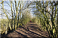 NZ3538 : Footpath along old railway embankment by Trevor Littlewood