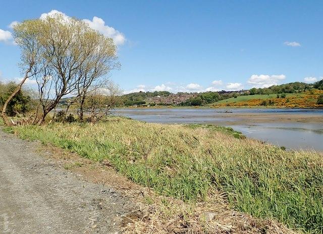 Salt marsh along the edge of the Middlebank
