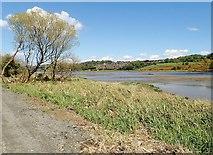J1021 : Salt marsh along the edge of the Middlebank by Eric Jones