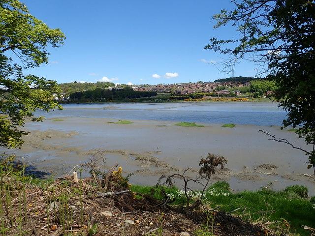 Esturine mud in the Newry River