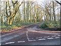 TL6004 : Road through woodland at Norton Heath, near Ongar by Malc McDonald