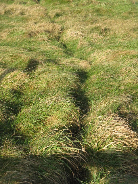 Animal track in rough grass