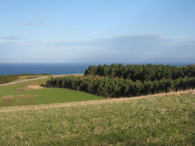 Plantations at Dowlaw