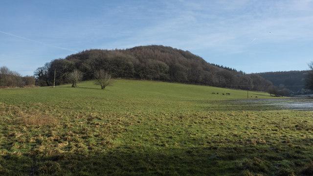 Hengrove Wood in winter